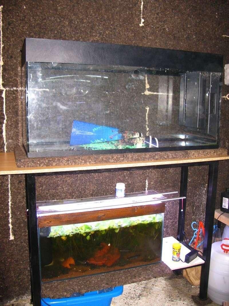 ma nouvelle fishroom - Page 2 Fishro14