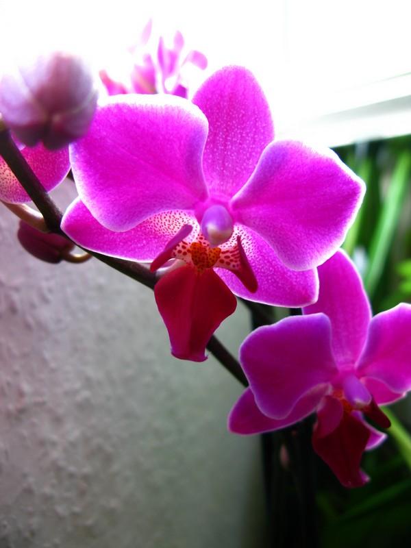 projet riparium - Page 2 Orchid10