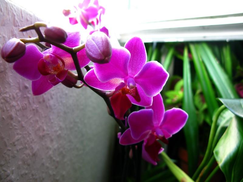 projet riparium - Page 2 Orchid12