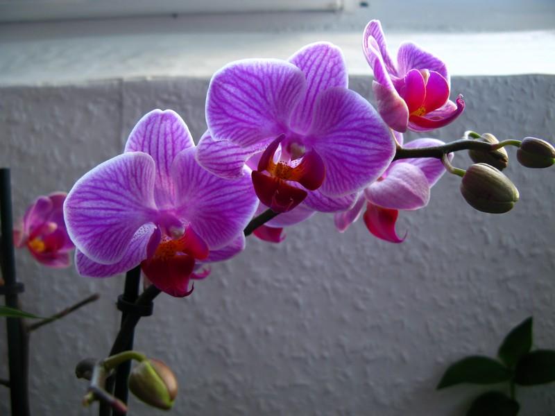 projet riparium - Page 2 Orchid13