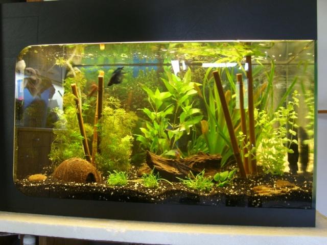 Mon bac fluviatile asiatique (120l) Stp65811