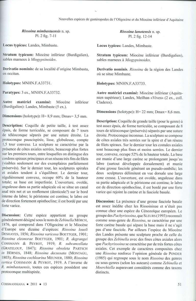 [résolu]Rissoina lanotensis n. sp. Miocène des Landes 110