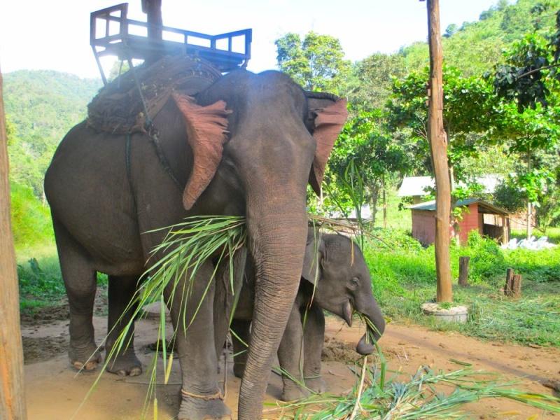 Thaïlande.....beau souvenir Elepha10