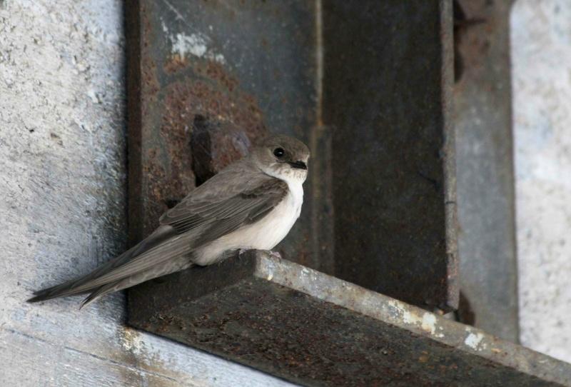 oiseau -Ajonc - 7 octobre trouvé par Martine 97430610