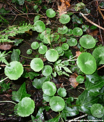 Un végétal - Blucat - 5 octobre trouvé par Jovany Ombili10