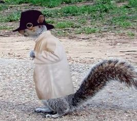un animal - Ajonc - 16 octobre trouvé par Sylvie - Page 2 Un-ecu10