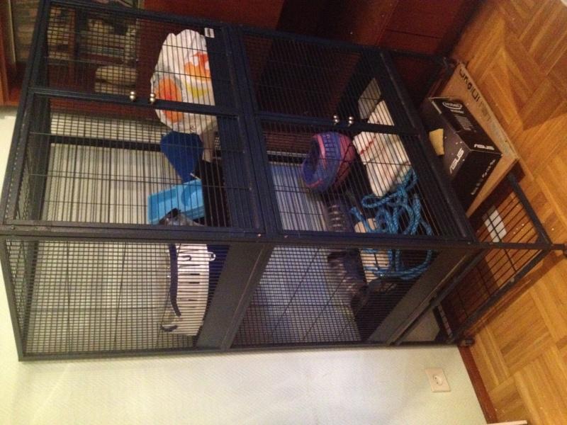 Cage savic suite royale (vendue)   Photo_24