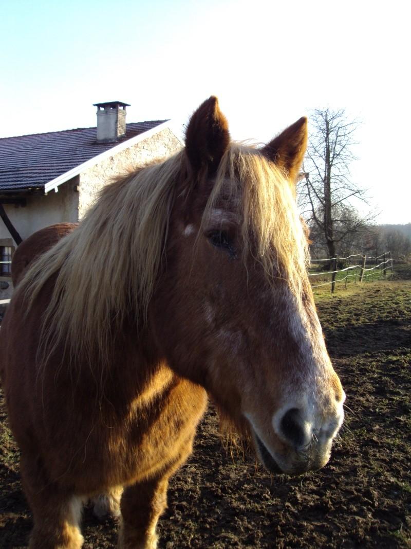 RAVENA - ONC trait née en 1983 - adopté en nçvepmbre 2010 par Cheyenne Dsc01912