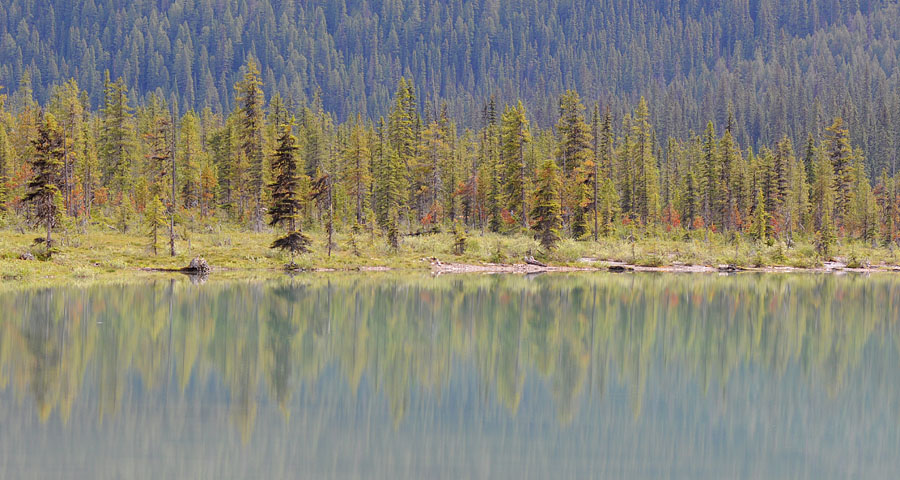 [Canada] Ouest canadien, des orchidées et des ours Dsc_0810