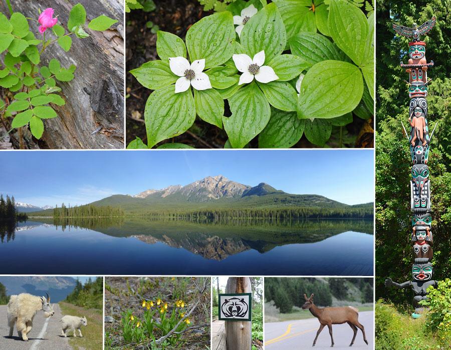 [Canada] Ouest canadien, des orchidées et des ours Introo10