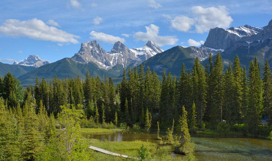 [Canada] Ouest canadien, des orchidées et des ours Jlr_3412