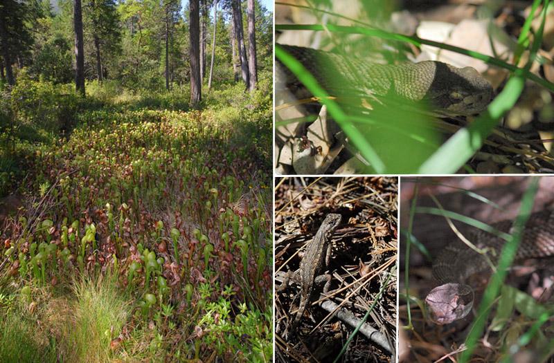 [USA] – Côte Ouest, de la Californie à l'état de Washington - Page 3 Ophrys11