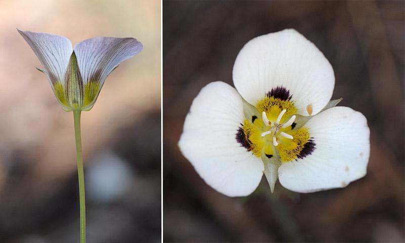 [USA] – Côte Ouest, de la Californie à l'état de Washington - Page 3 Ophrys19