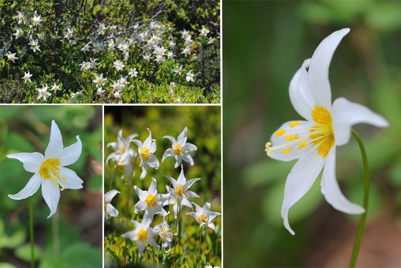 [USA] – Côte Ouest, de la Californie à l'état de Washington - Page 3 Ophrys21