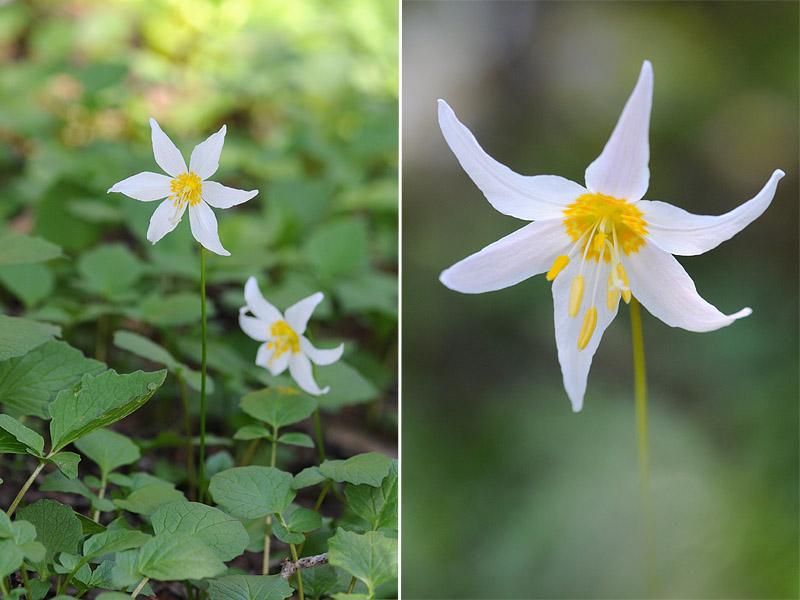 [USA] – Côte Ouest, de la Californie à l'état de Washington - Page 3 Ophrys22