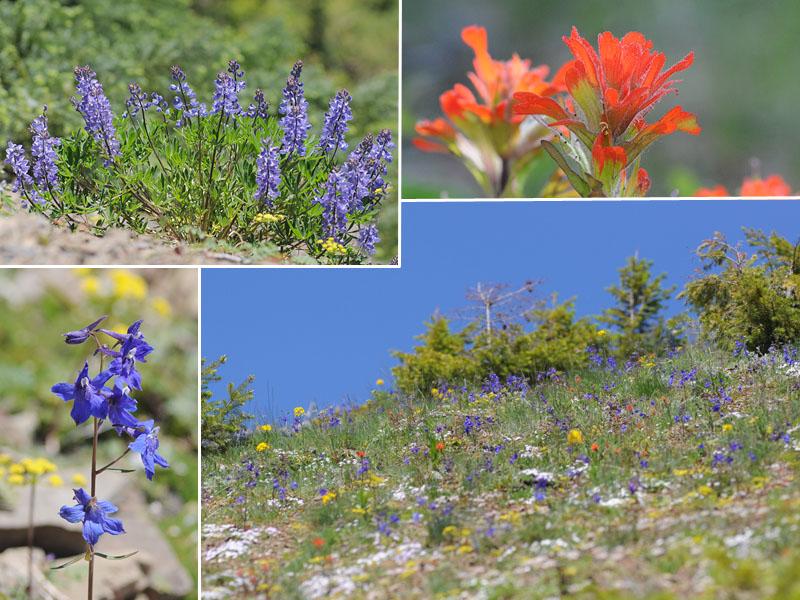[USA] – Côte Ouest, de la Californie à l'état de Washington - Page 3 Ophrys23