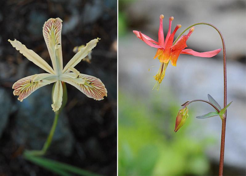 [USA] – Côte Ouest, de la Californie à l'état de Washington - Page 3 Ophrys25