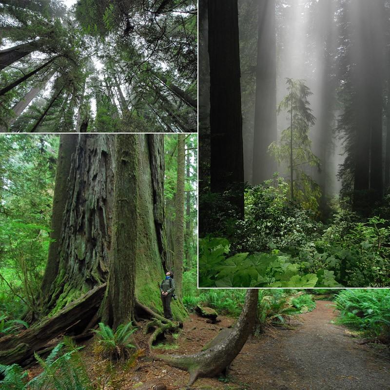 [USA] – Côte Ouest, de la Californie à l'état de Washington P14_re10