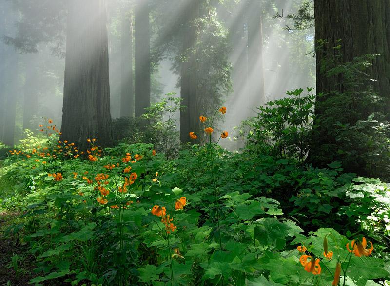 [USA] – Côte Ouest, de la Californie à l'état de Washington P15_re10