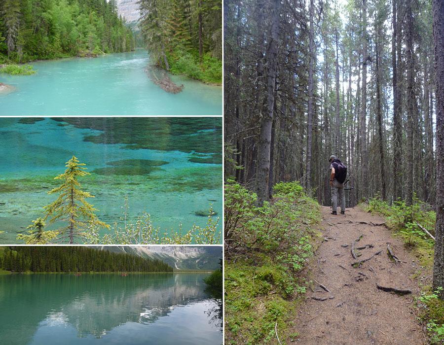 [Canada] Ouest canadien, des orchidées et des ours Rando-11
