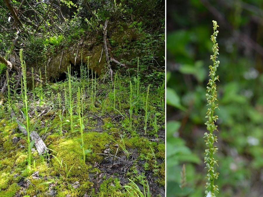 [Canada] Ouest canadien, des orchidées et des ours - Page 3 Strict10
