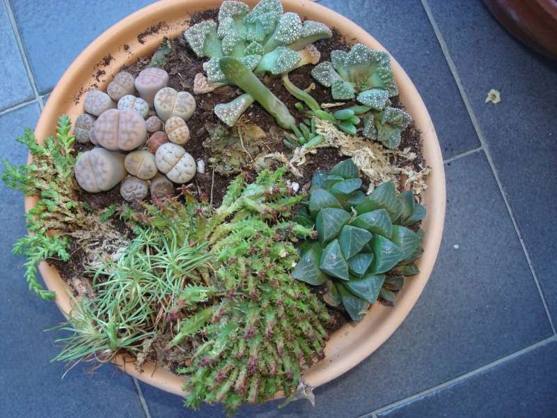 petits pots de terre pour mini succulentes Dsc00626