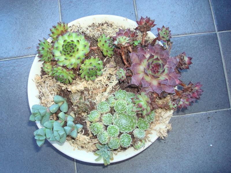 petits pots de terre pour mini succulentes Dsc00627