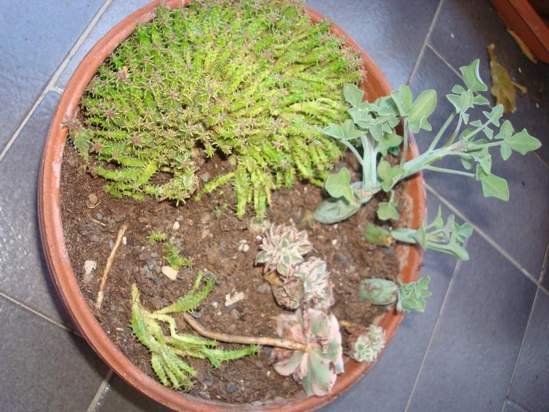 petits pots de terre pour mini succulentes Dsc00628