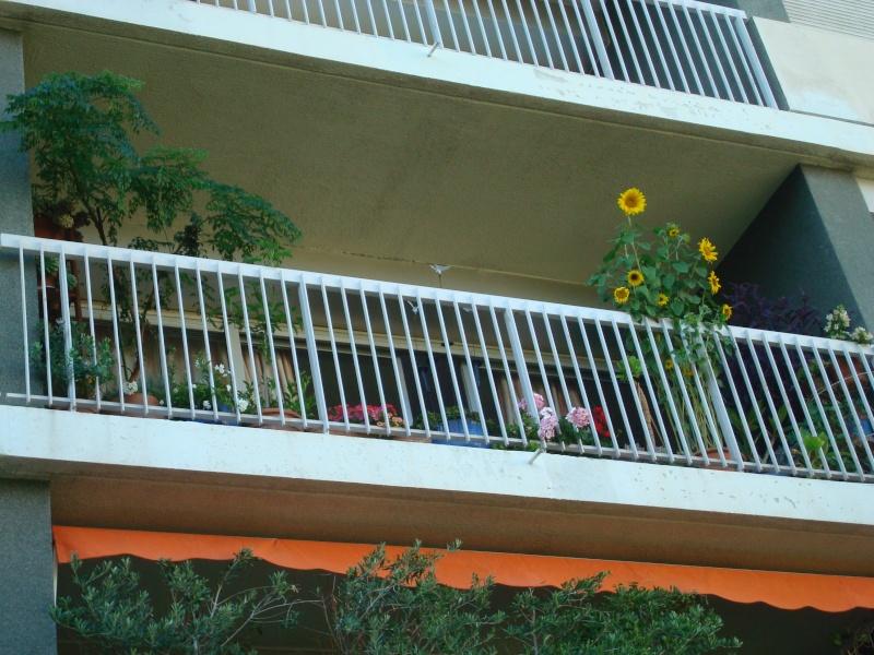 ambiances estivales au jardin - 2014 - Page 3 Dsc00637
