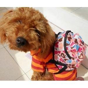 Accessoires de mode pour chiens, pour ou contre ?  - Page 5 Chien_10
