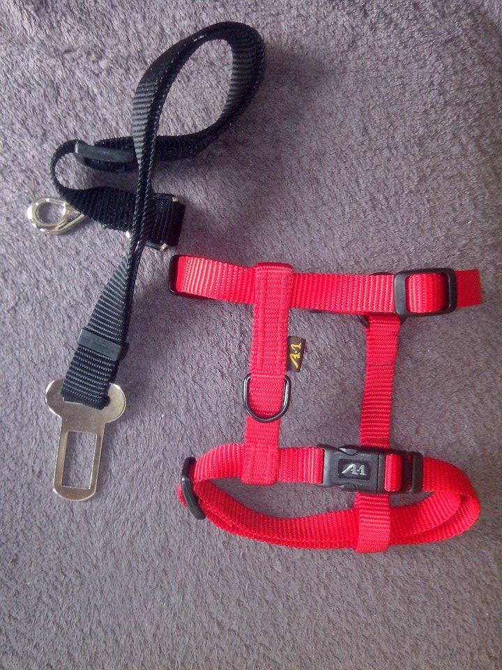 Accessoires - Les accessoires de vos animaux en particulier les chiens.  - Page 2 Harnai10