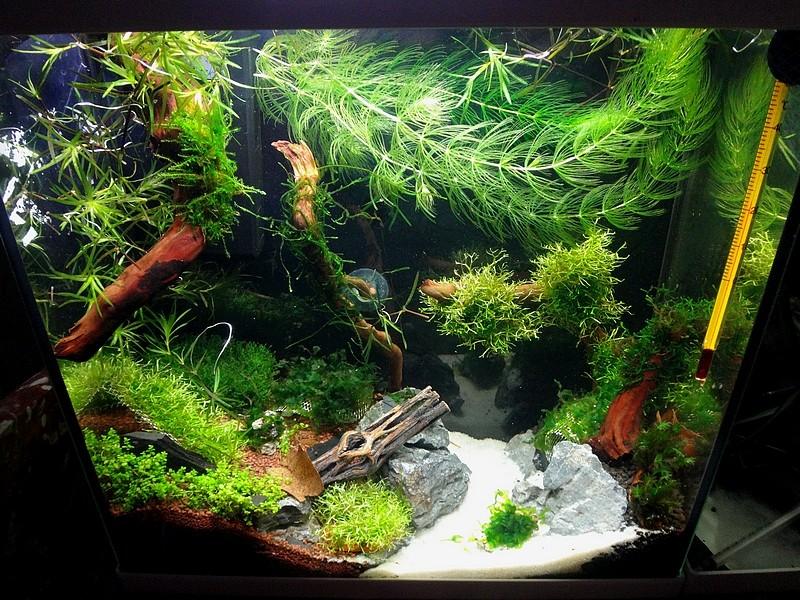 Aquarium 15L - Page 2 20140811