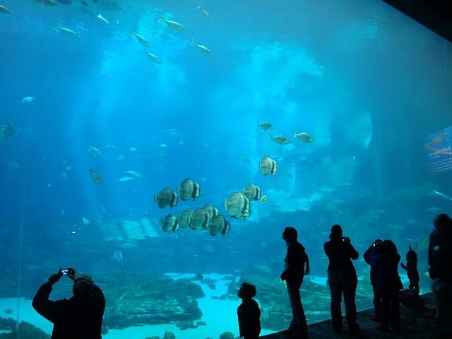 L'aquarium d'Atlanta (usa, floride) 24111313