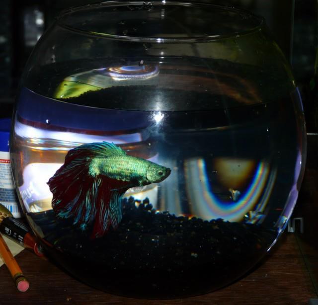 Mon petit aquarium 38865210