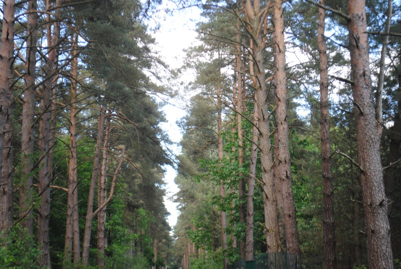 La forêt de Brocéliande Dsc_0010