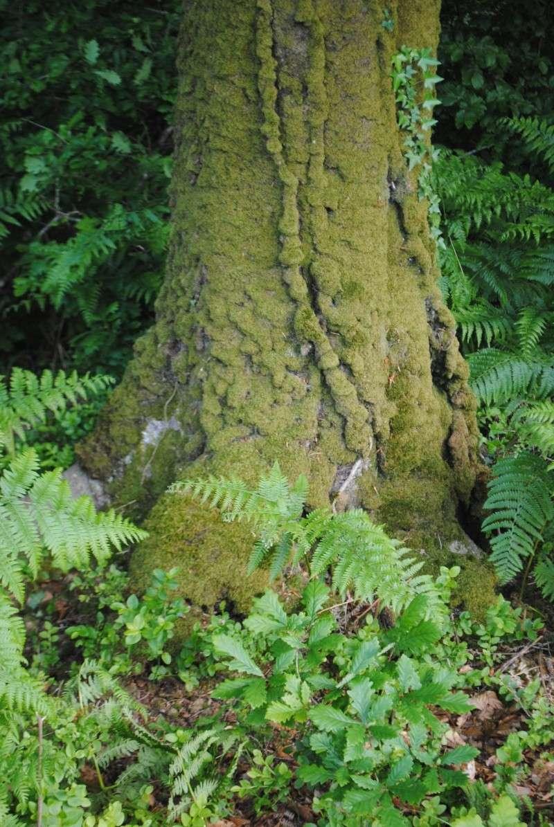 La forêt de Brocéliande Dsc_0011