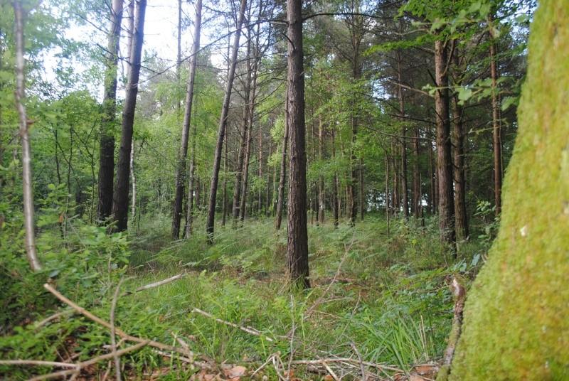 La forêt de Brocéliande Dsc_0012