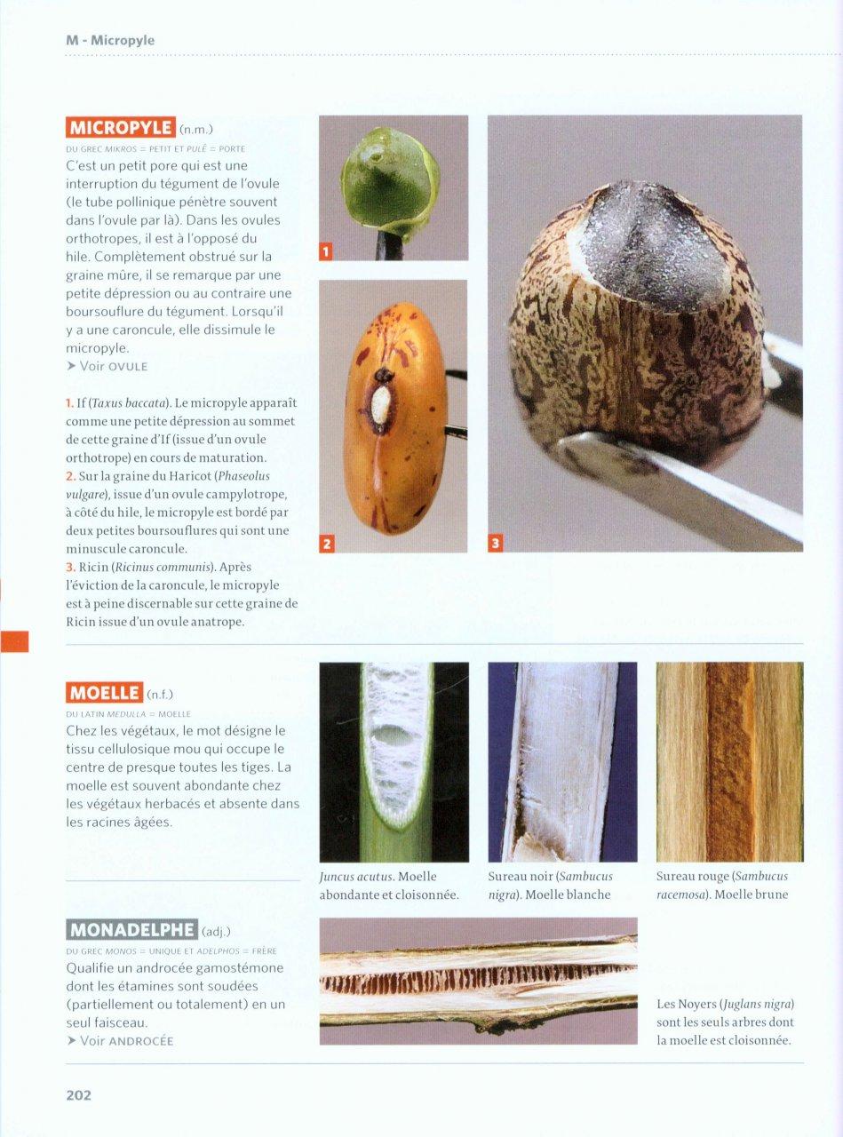 Vocabulaire botanique illustré Reille11