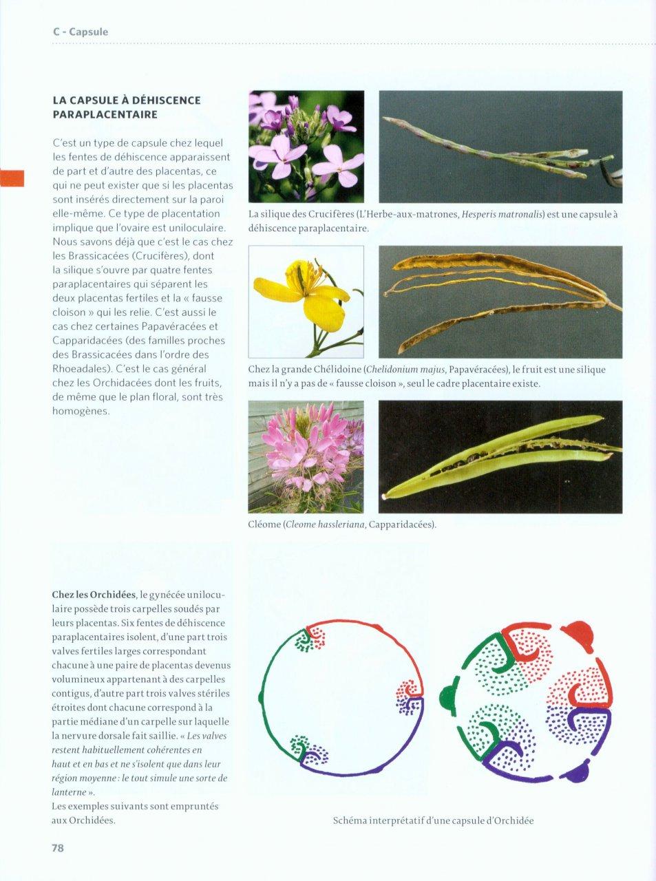 Vocabulaire botanique illustré Reille12