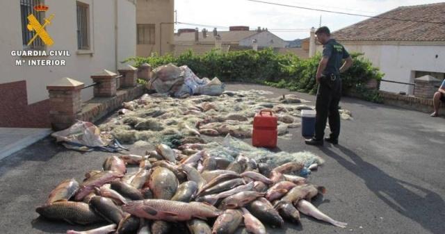 Gros flag de trafic de carpes et autres poissons en espagne ! Flag10