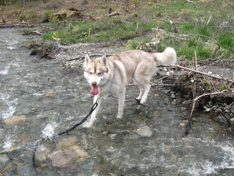 norvege avec mon chien Img_0510