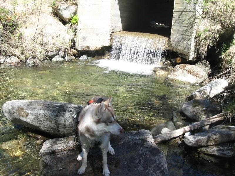 norvege avec mon chien Img_0516