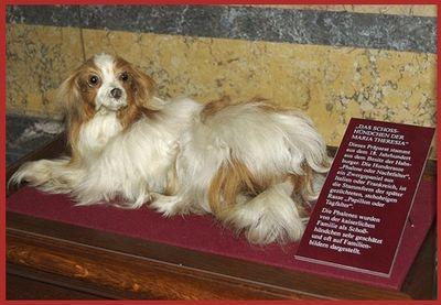 Les chiens de Marie Antoinette Chien_10