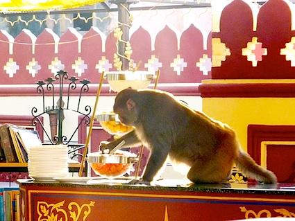 Le bar d'Octobre 2012 Monkey10