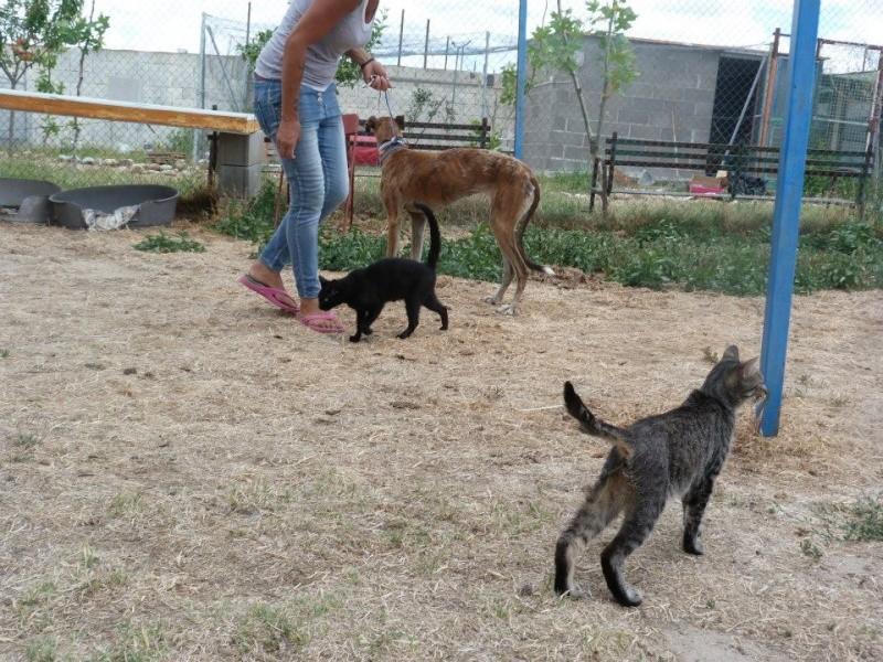 "Doris –douce et émouvante galga de 2007 à l'adoption""Scooby France""Adoptée  Doris_10"