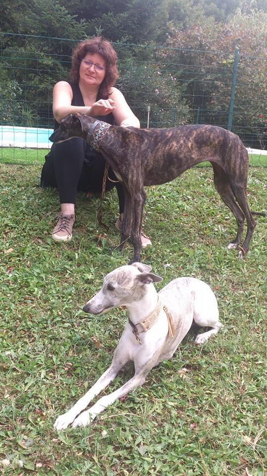 Faith/Guess petite galga à l'adoption Scooby France  Adoptée  - Page 3 Faith_19