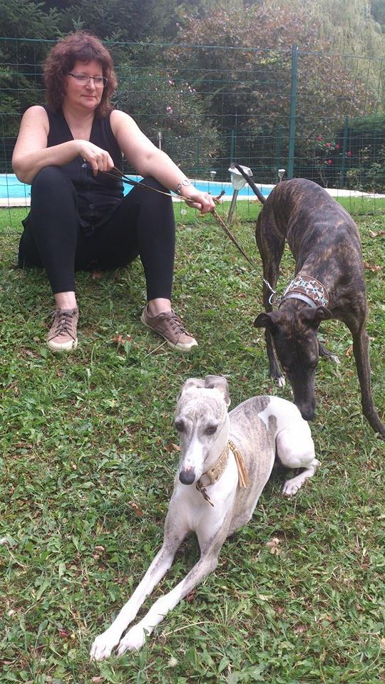 Faith/Guess petite galga à l'adoption Scooby France  Adoptée  - Page 3 Faith_20