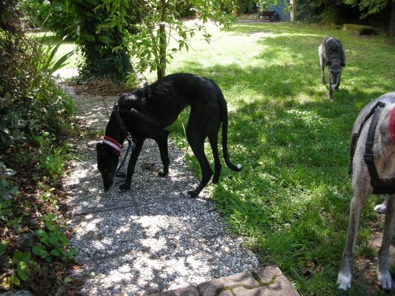 Fortunata galga à l'adoption Scooby France Adoptée - Page 5 Fortun11
