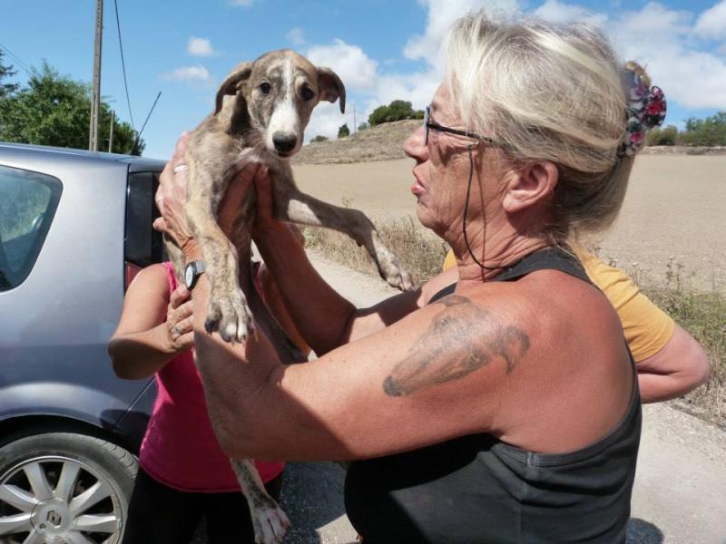 Zoé – Adorable galguita Scooby France –Adoptée !  Zoa_ga10