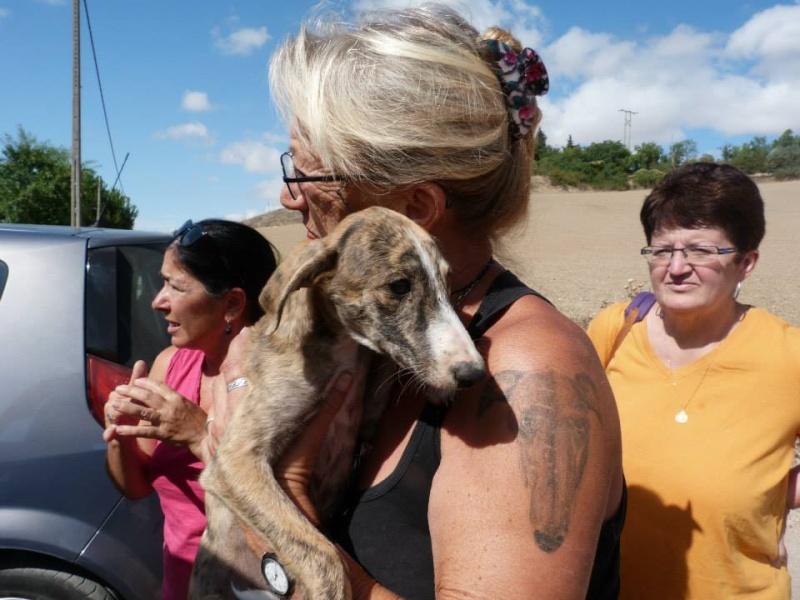 Zoé – Adorable galguita Scooby France –Adoptée !  Zoa_ga12